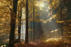 Waldbestattung, Blick auf eine Waldlichtung